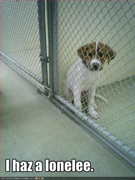 adoption beagle fence lonely Sad - 1679841024