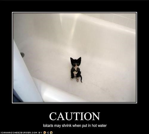 bath caution kitten tiny wet - 1681735936