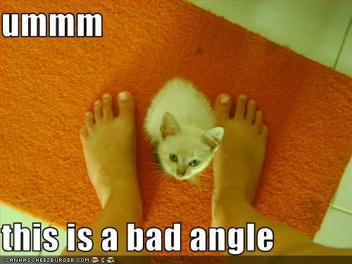 cute gross kitten - 1681863424