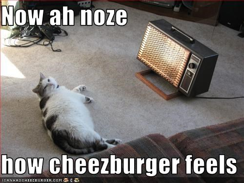 Cheezburger Image 1682594560