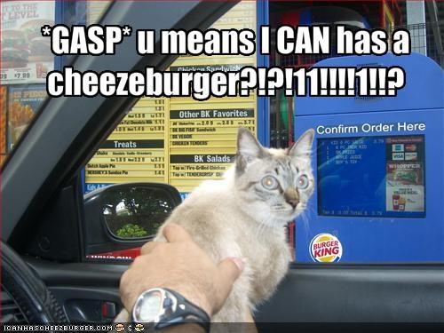 Cheezburger Image 1685006592