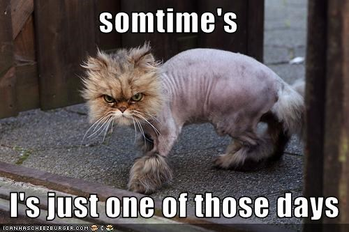 Somtime S I S Just One Of Those Days Cheezburger Funny Memes Funny Pictures