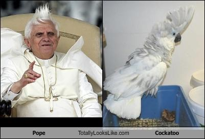 bird fauxhawk feathers hair Pope Benedict XVI religion - 1685709568