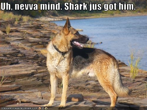 german shepherd jaws lake movies water