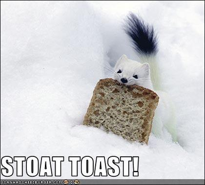 STOAT TOAST!