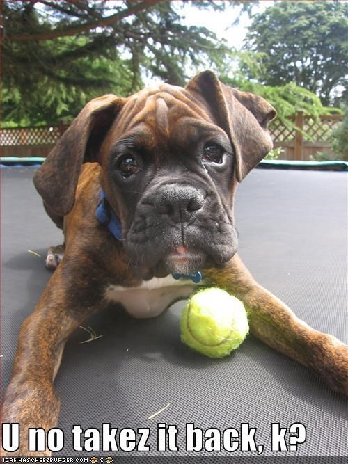 ball boxer outdoors toy yard - 1689085696