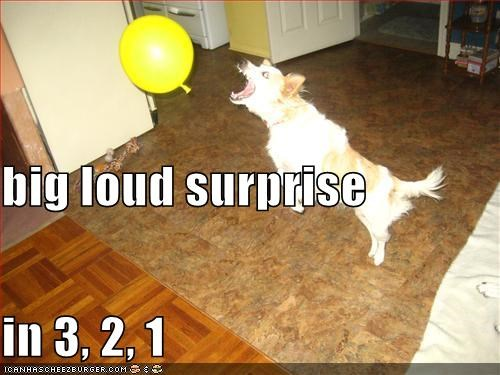 balloon,indoors,surprise,whatbreed