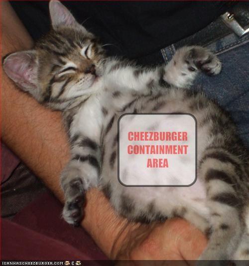 Cheezburger Image 1690324736