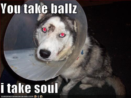 ball,cone,husky,neutered,revenge
