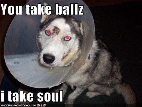 ball cone husky neutered revenge - 1692350208
