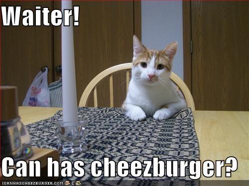 Cheezburger Image 1692775168