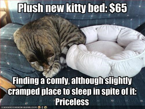 bed,couch,nap,priceless