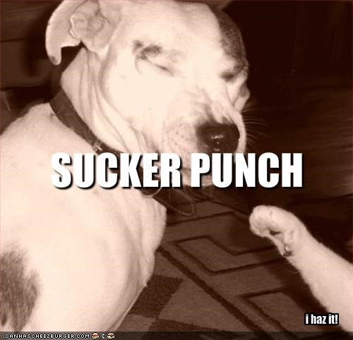 fighting lolcats paw pitbull - 1692838656
