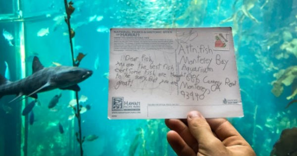 twitter postcard aquarium cute - 1696517