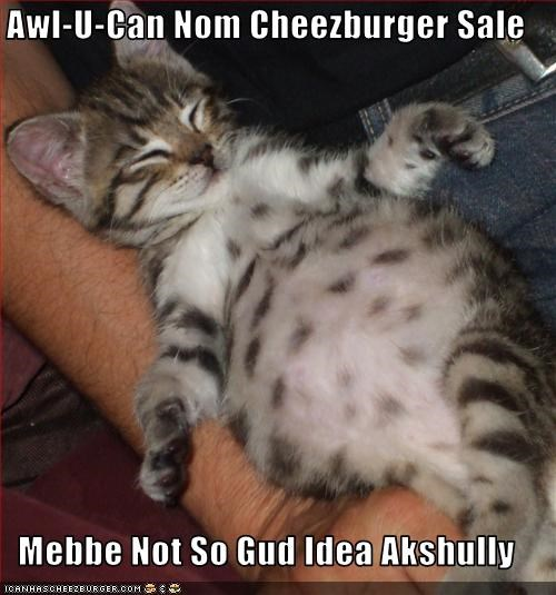 bad idea buffet cheezburger cute full kitten - 1696607488