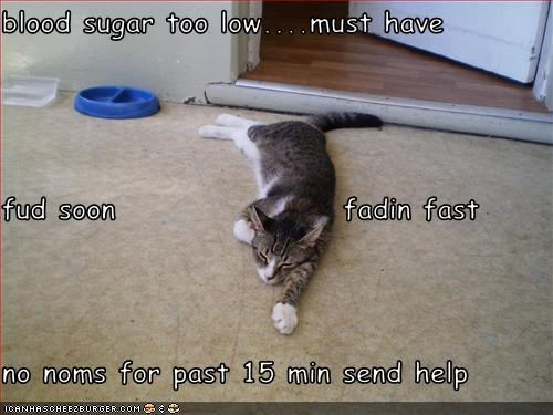 Blood Sugar Too Lowmust Have Fud Soon Fadin Fast No Noms For