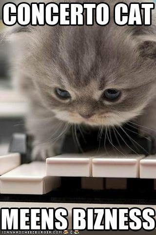 bizness cat concerto cute gray Hall of Fame kitten lolcat - 1701985536