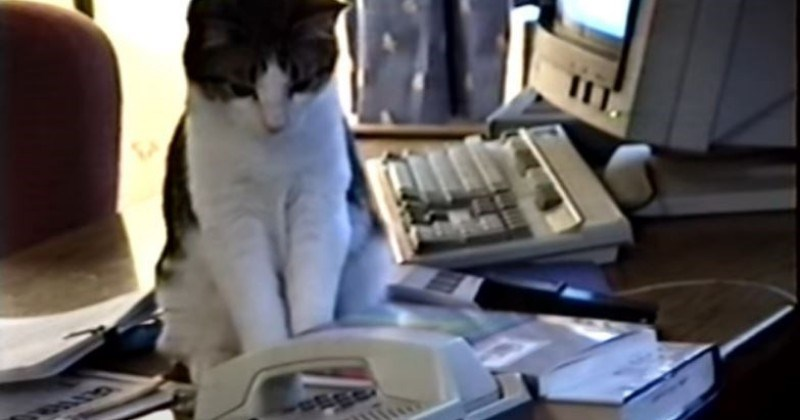 Cat Answers Incoming Phone Call Video I Can Has Cheezburger