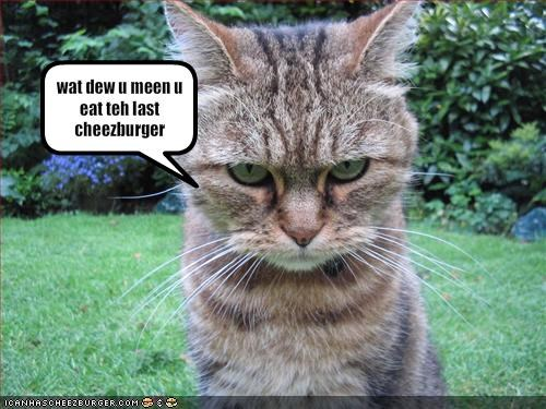 Cheezburger Image 1702177024