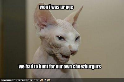 Cheezburger Image 1702428928