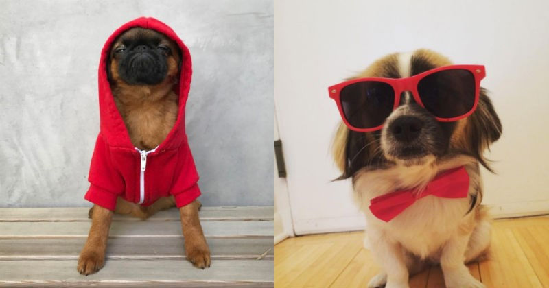 dogs red Protest feminism women - 1703941
