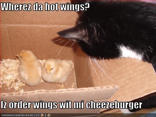 Cheezburger Image 1704170240