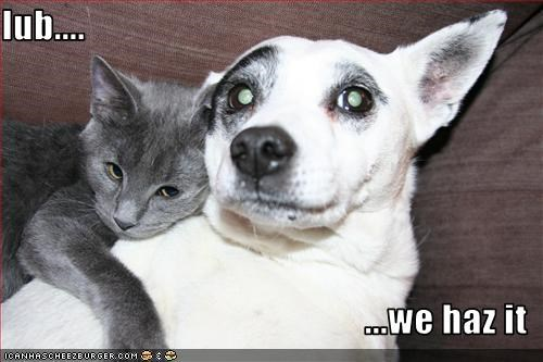 lolcats,love,romance,whatbreed