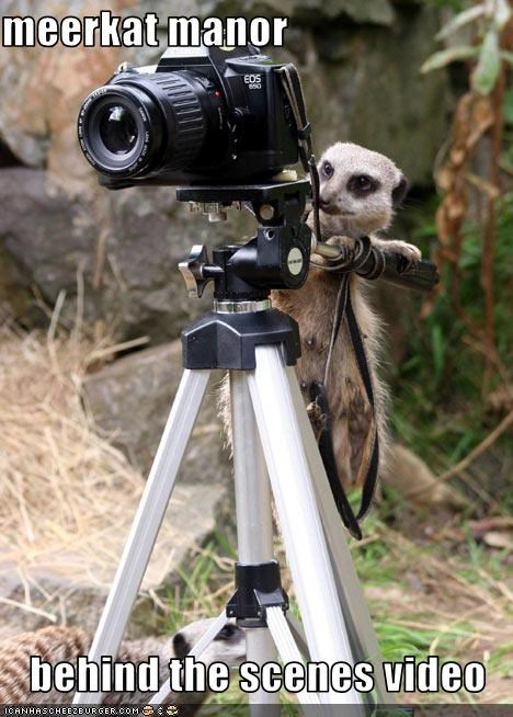 animated gifs,anime,behind the scenes,camera,gifs,meerkat