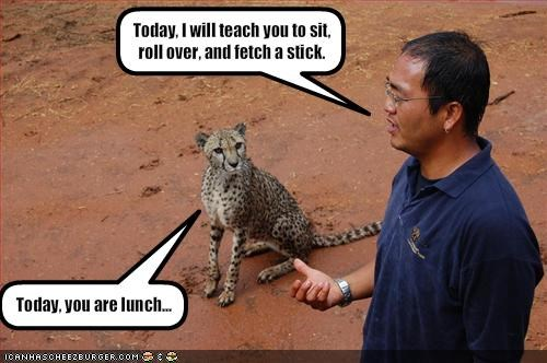 lolcheetahs lunch murder nom nom nom training - 1705664256