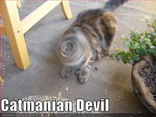 drillcat scary - 1707635968