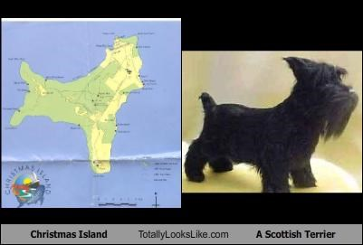 animals Christmas Island dogs Funny Shapes scottish terrier - 1708519168