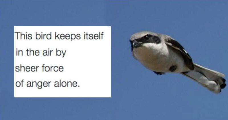 birds Memes birbs meme list - 1708549