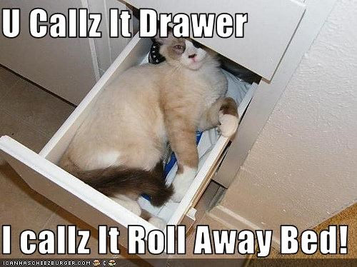 bed,drawer,nap