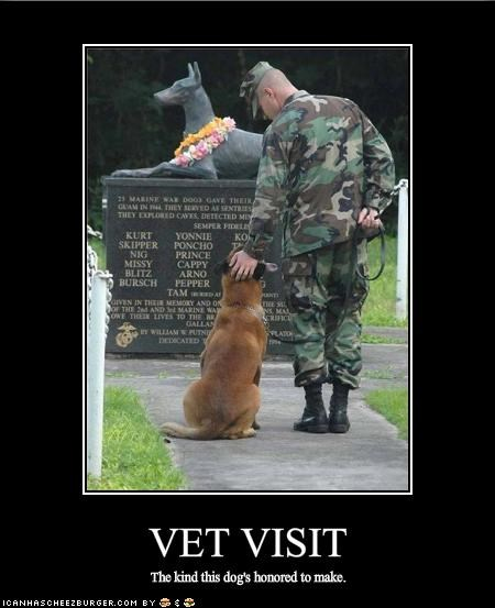 german shepherd hero honor military touching vet - 1709800704