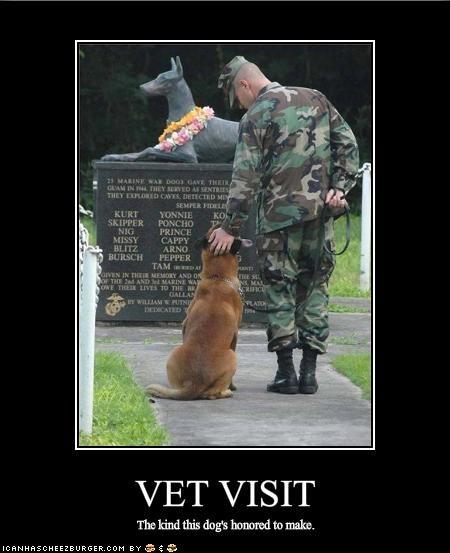 german shepherd hero honor military touching vet - 1709800704
