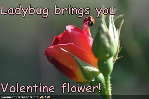 Ladybug brings you  Valentine flower!