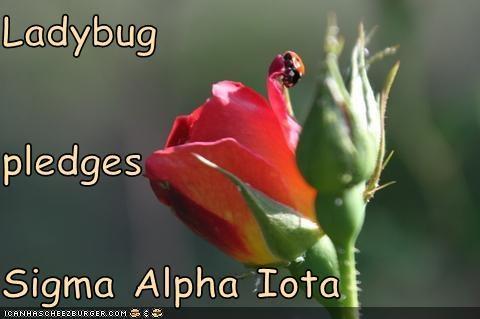 Ladybug  pledges Sigma Alpha Iota