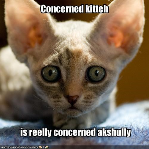 concerned,hairless,kitten