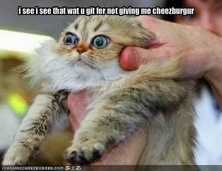 Cheezburger Image 1712511232