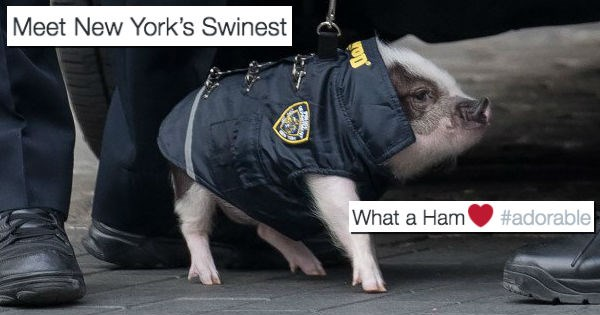A Tiny Pig in a Police Uniform Posed With Some Real Officers and the Internet Loved It