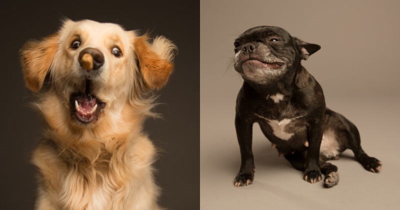 dogs photography portrait funny derp