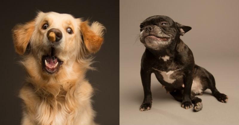 Derpy Dog Portraits