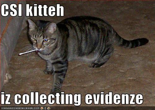 crime evidence murder - 1716481280