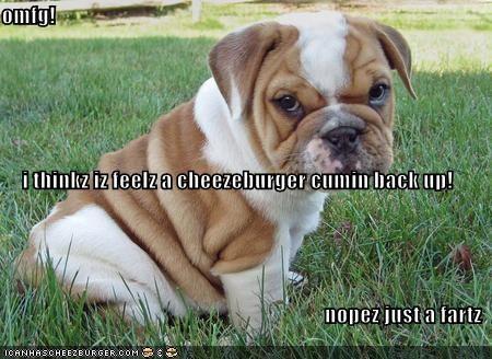 Cheezburger Image 1716508416