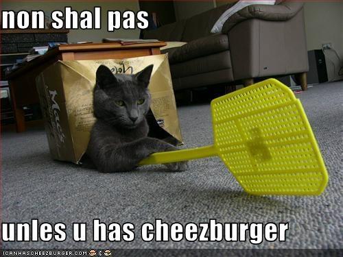 Cheezburger Image 1721278208