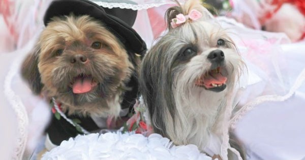 dogs photography wedding married - 1721349