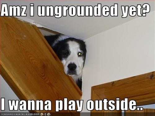 border collie indoors outside playing stairs - 1721365760