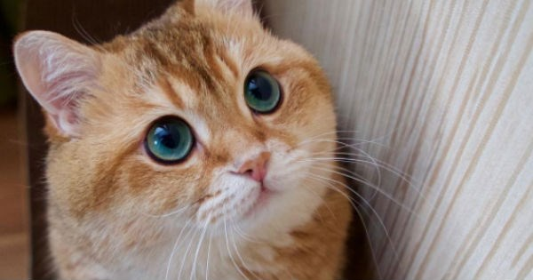cute pictures of Hosico Cat