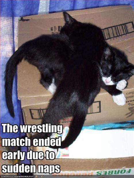 cute kitten nap wrestling - 1726502656