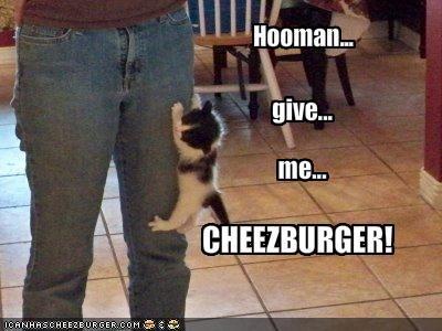 Cheezburger Image 1726683904